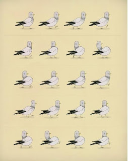 Why+do+pigeons%2527+heads+bob.jpg