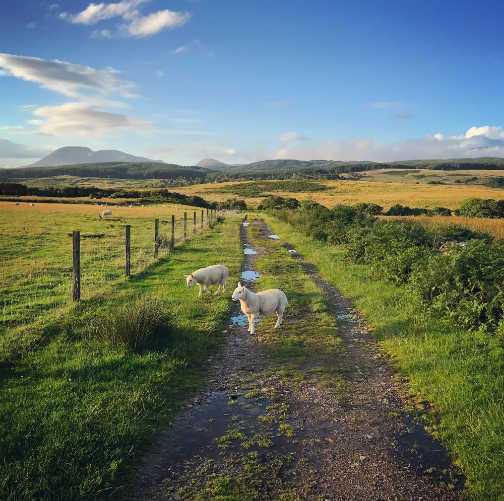 hochstein-design-best-of-2017-part-2-machrie-moor-pathway-sheep.jpg