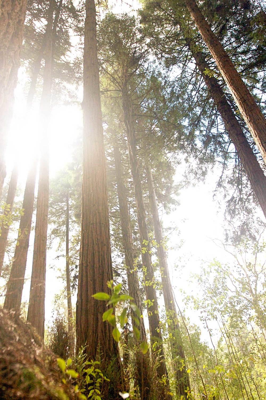 big-trees.jpg