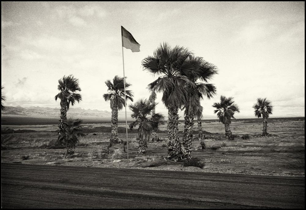 palms and flagsprint.jpg