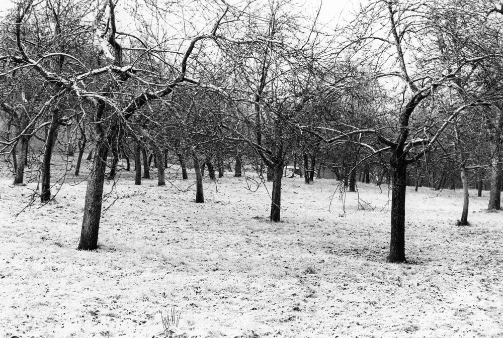 trees_snow.jpg