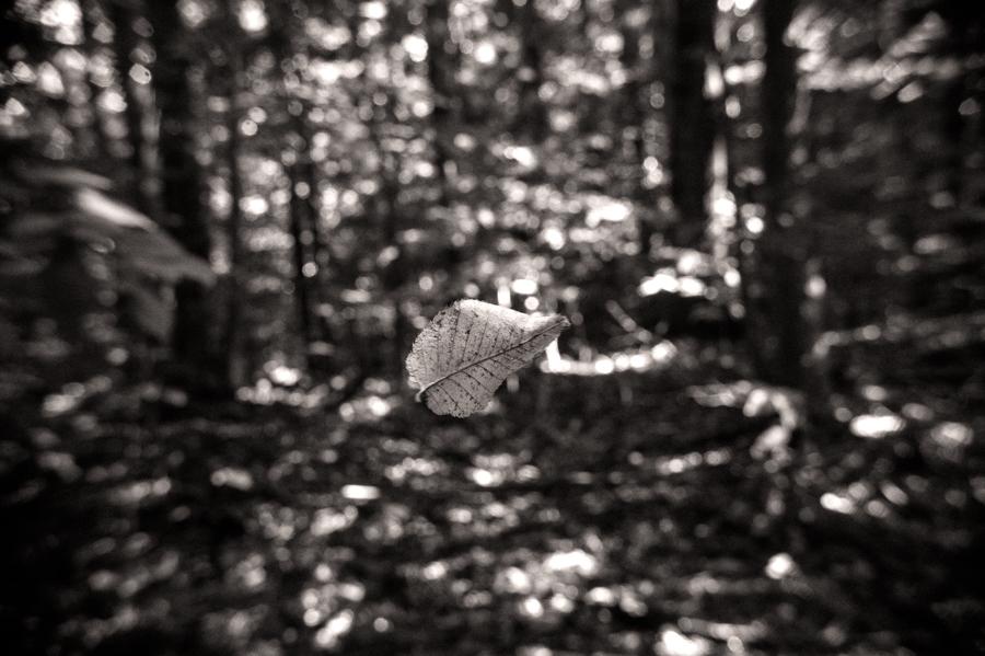 Untitled-30.jpg