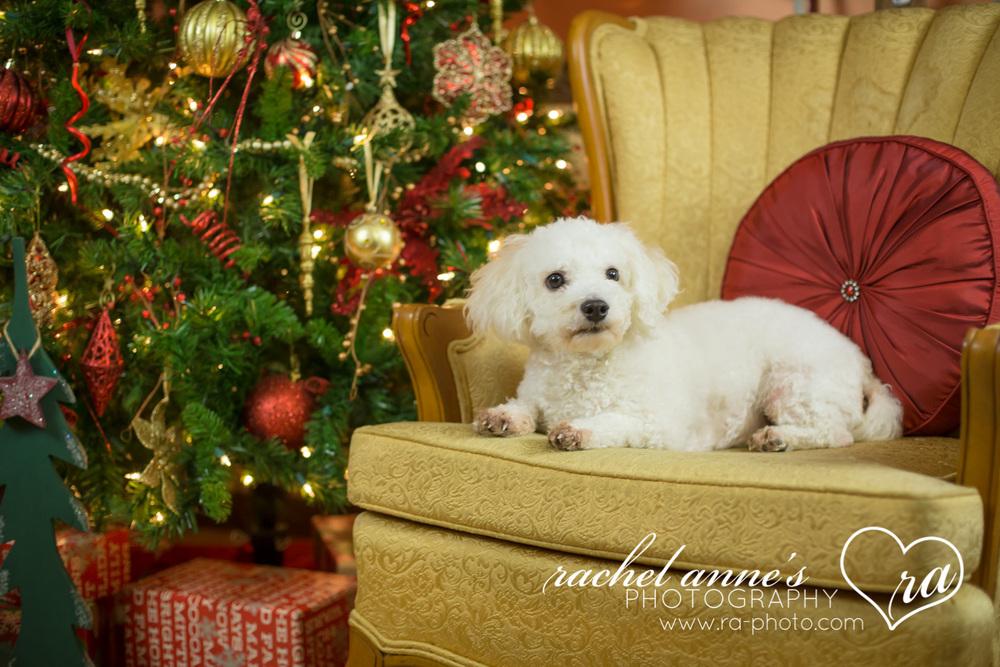054-SRL-CHRISTMAS-FAMILY-PORTRAITS.jpg
