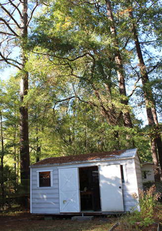 My studio shed in my backyard surrounded by the North Carolina pines