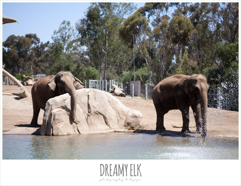 elephants at san diego zoo