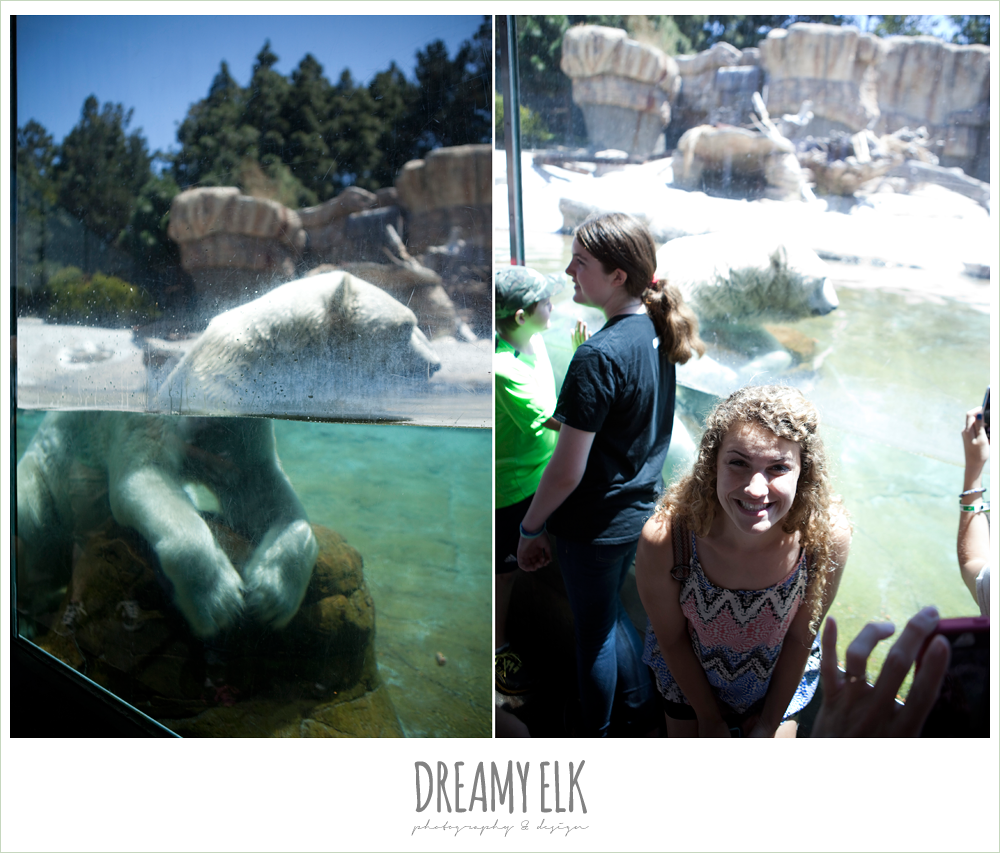 polar bears at san diego zoo