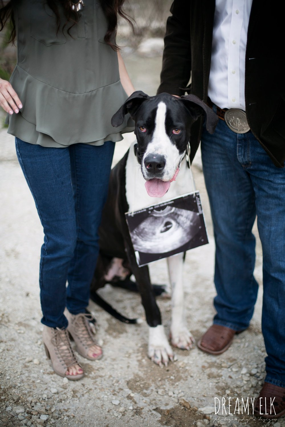 pregnancy announcement with dog, great dane, fun winter anniversary photo shoot, bull creek park, austin, texas {dreamy elk photography and design}