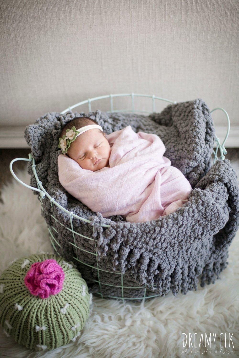 newborn baby girl photo, cactus