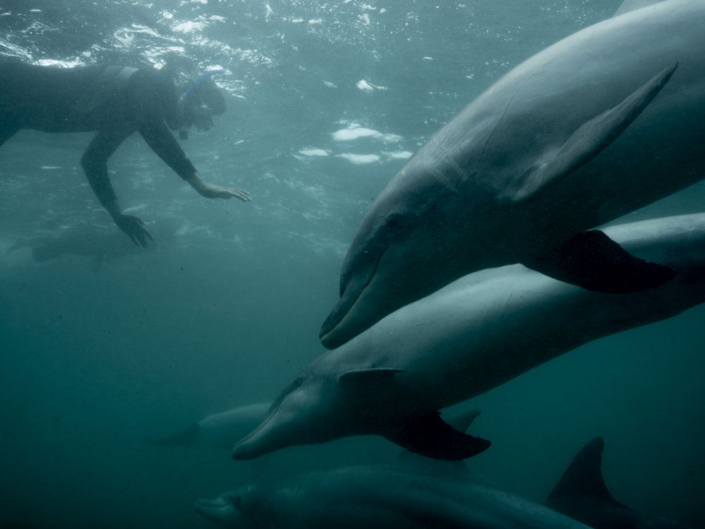 Baird Bay Ocean Eco experience - swimming with dolphins - Michaela Skovranova / Greenpeace