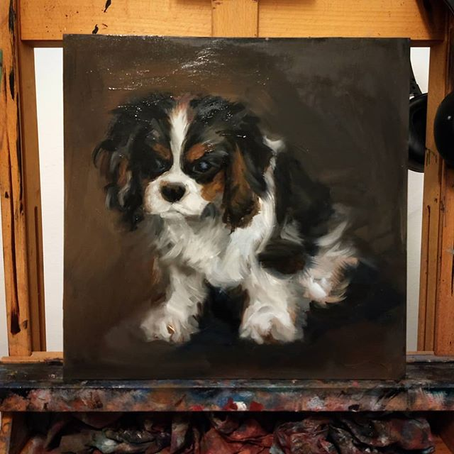 A quick little study of The Great Gatsby before moving on to the more elaborate commission! 🖤 12x12 wood on panel #laceyjaneart #laceyjane #custom #oilpainting #thegreatgatsby #dogpainting #dogart #dogsofinstagram #fluff #soeffingcute #customart #comission #classicalpainting #classicalart #realism #artistsofinstagram #art #allaprima #painting #realisticpainting #woofwoof #muddycoloursbringmejoy