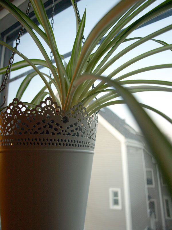 Beautiful morning, cold and wintery outside- bundling up for a slew of errands!   (Hanging Flower pot from IKEA.)
