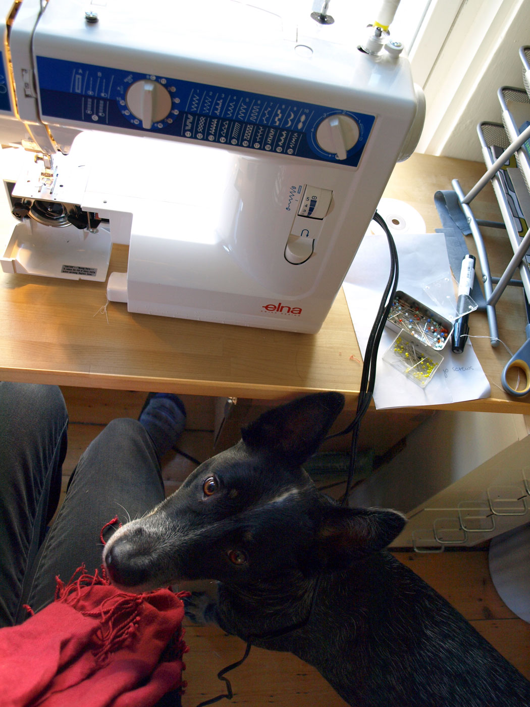 In the studio with Radio, this dog has the curiosity of a cat: Watching me wind bobbins for a day of sewing.