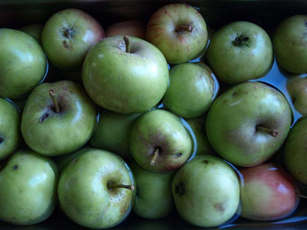 Foraged apples.