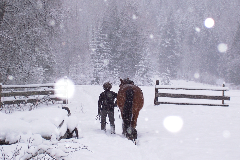 Success Stories    Horses