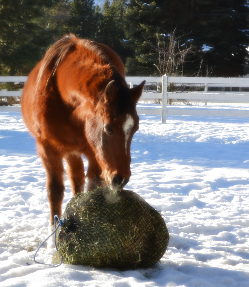 Pazzaz with her Handy Hay Net.