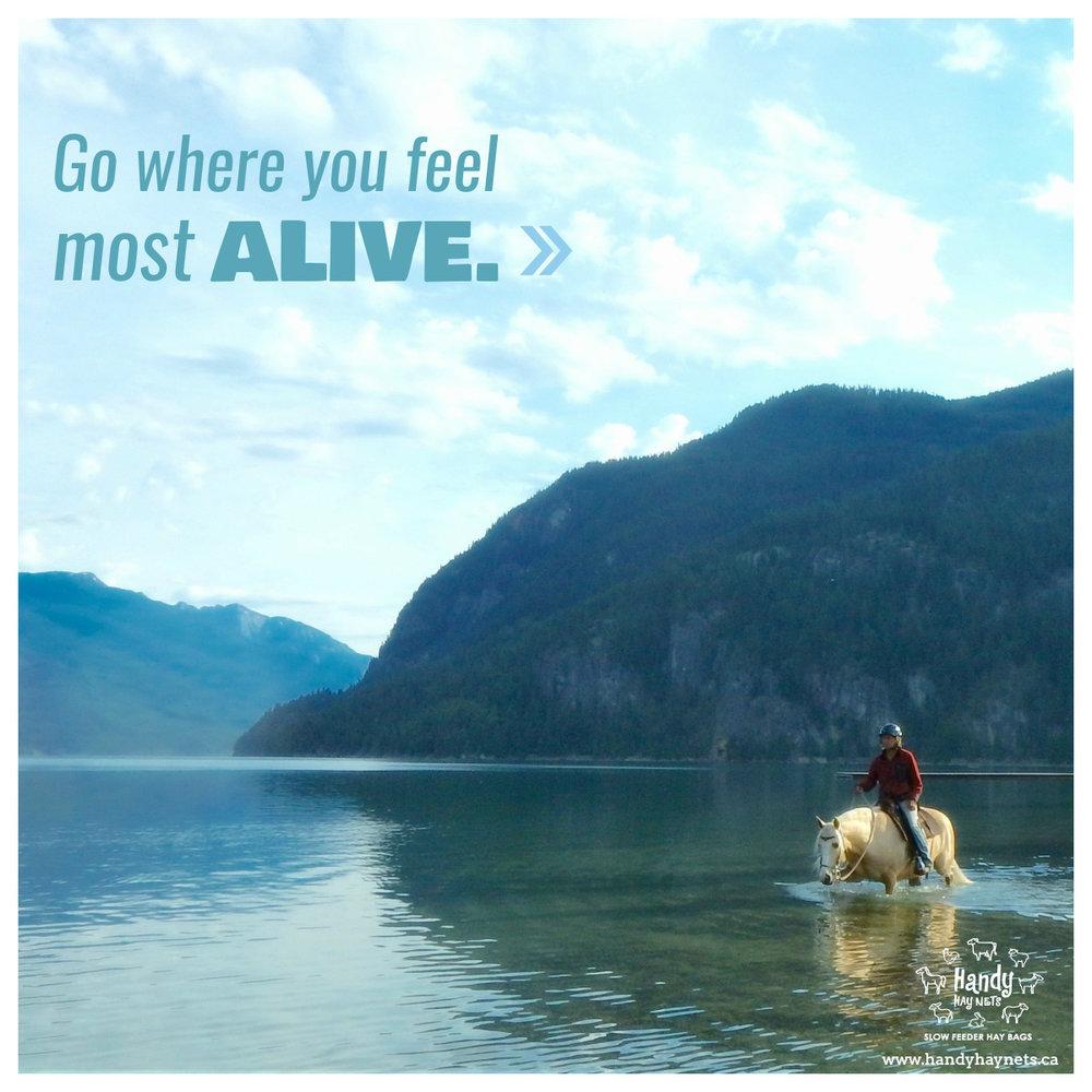 go-where-you-feel-most-alive.jpg