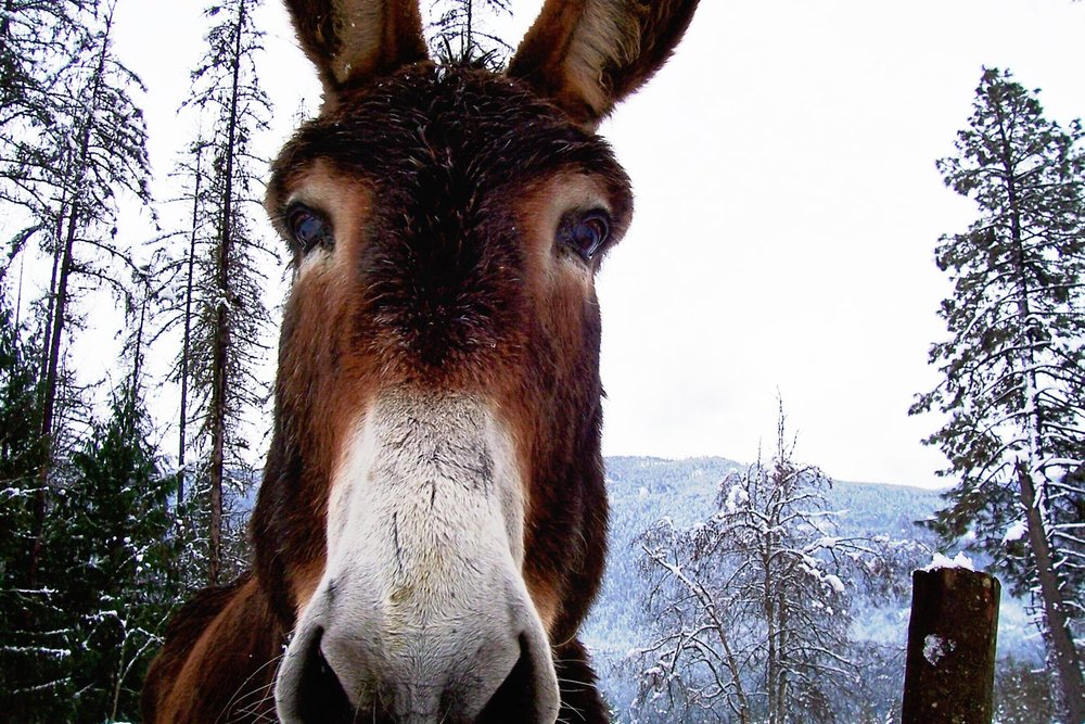 winter-donkey.jpg