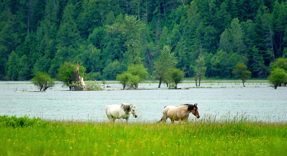 grazing-by-the-river-header-new.jpg