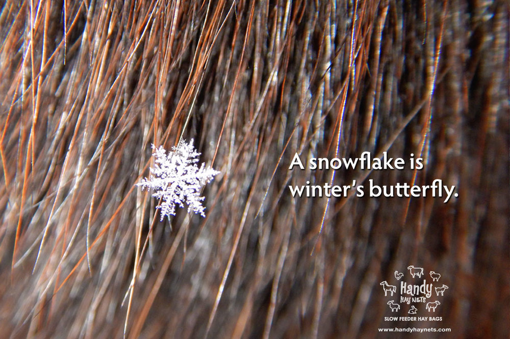 a-snowflake-is-winters-butterfly.jpg