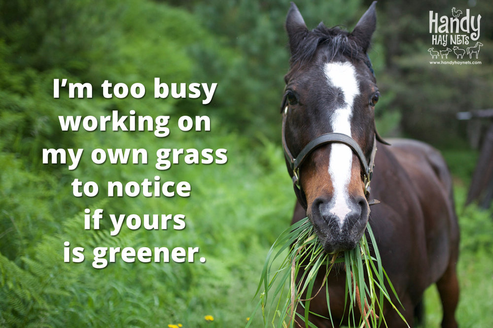 too-busy-working-on-my-own-grass.jpg