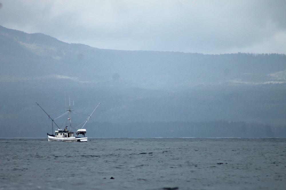 "A commercial fishing boat slowly ""trolls"" the waters of sitka. Trolling is a method of fishing where multiple fishing lines are rigged with hooks, baited with lures, and are dragged behind a slowly moving boat. Our boat was trolling as well, but with only two hooks. Commercial boats can be rigged with upwards of 100 hooks at once."