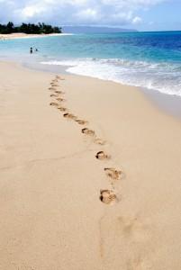 Tropical beach scene on a sunny day iin Oahu, Hawaii