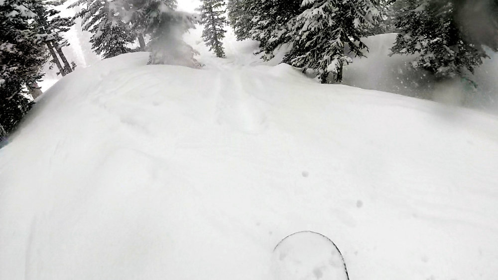 April bird pow - 4/16 @ Snowbird