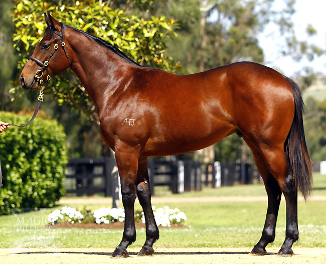 Magic Millions Premier Sale Lot 529 - FASTNET ROCK/ LIVEALIFEOFLOVE colt