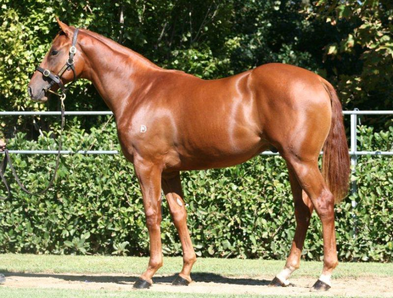 Lot 241 - By Northern Meteor ex Tara's Spur colt, purchased for $450,000 by Blue Sky Bloodstock/Gai Waterhouse Racing