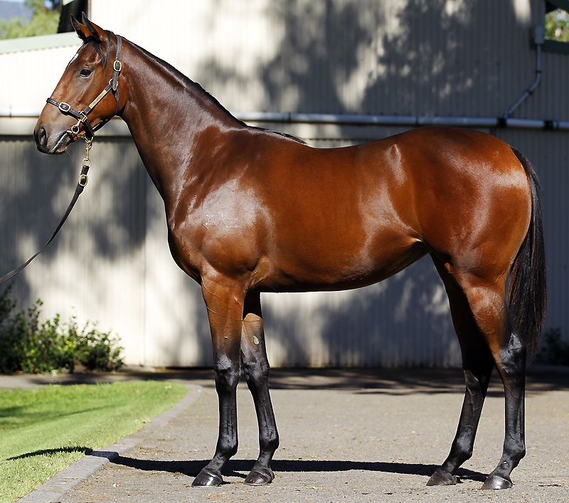 Lot 330 - By Duporth ex Baby Corn filly purchased for $260,000 by Blue Sky Bloodstock/Gai Waterhouse Racing