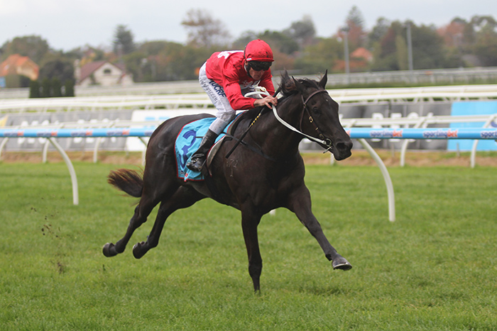 Pressing will head to Brisbane and be aimed at the Group One J. J. Atkins (1600m) on June 7. Picture by Turfpress