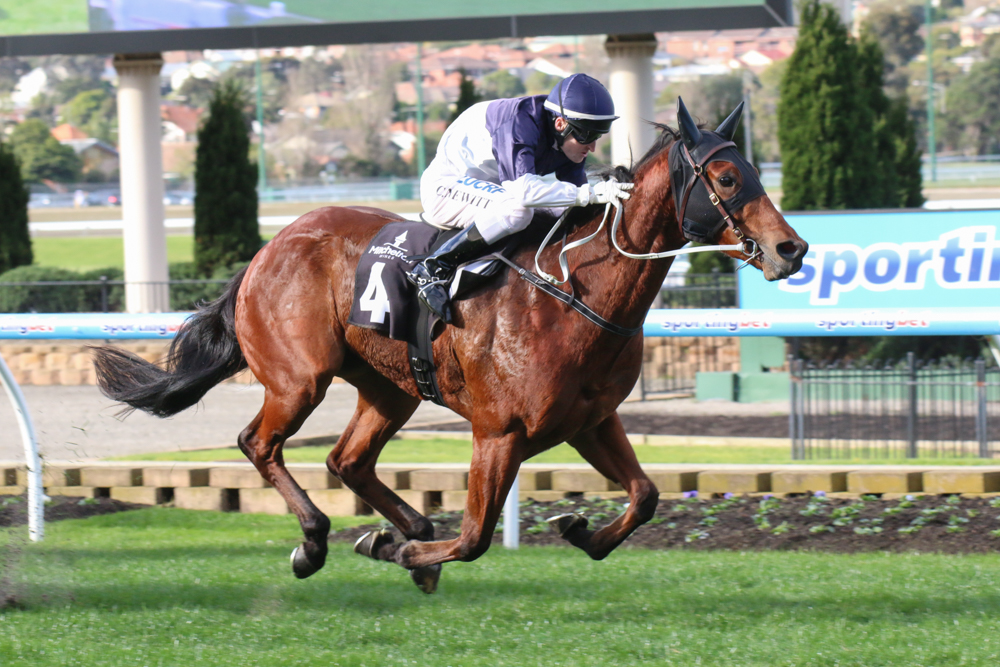 Stakes winner Nordic Empire went down by a narrow margin in the Group Three HDF MCNeil Stakes.  (photo by Race Horse Photos Australia)