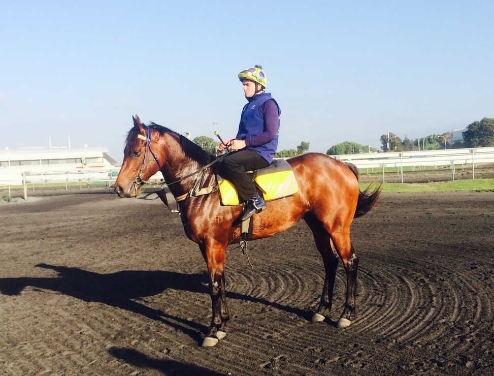 Lightning Rock (Fastent Rock) pictured at trackwork recently.