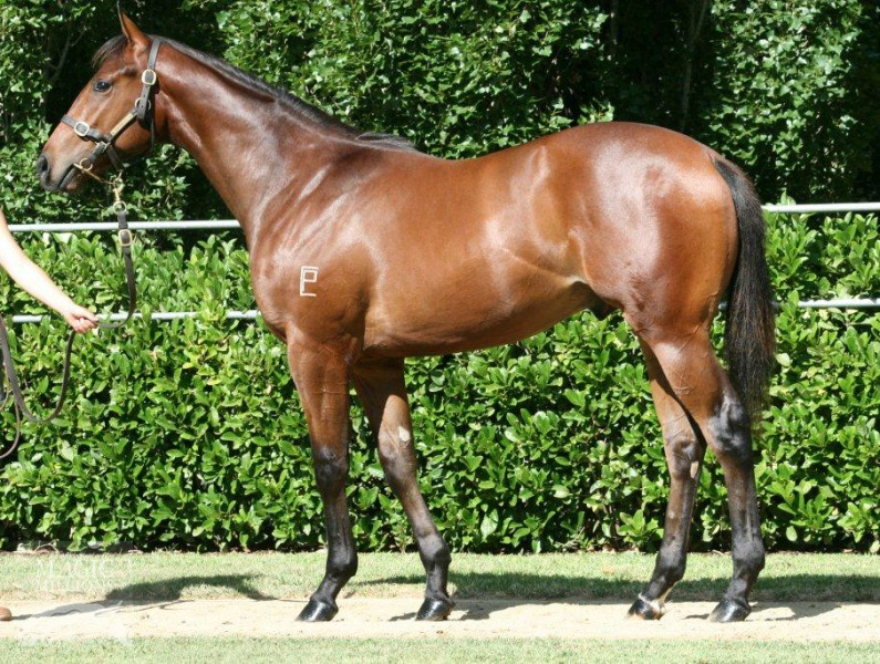 Newhaven Park Lot 502: I Am Invincible x Pacific Dreams, by Desert Prince - $140,000 Blue Sky Bloodstock/Toby Edmonds