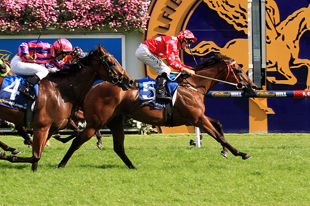 SHAMAL WIND - Procured and purchased privately in 2014 and sold to James Harron Bloodstock' client Donna Love. The well bred mare went to win at Listed and Group 1 level in 2015 for her new owners. The valuable racing and breeding prospect now heads to Royal Ascot in 2015.