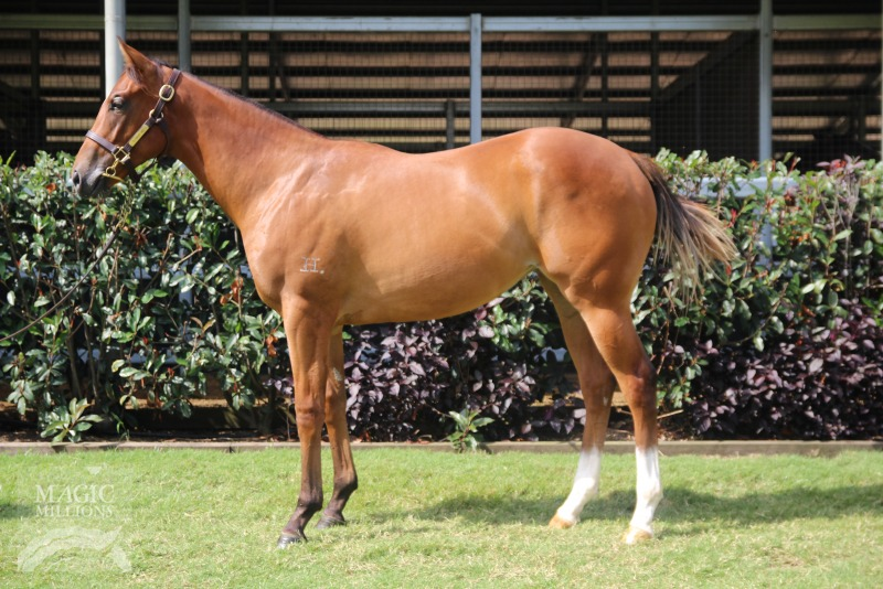 Lot 286: Redoute's Choice x Hanky Panky filly - click image to view Sirecam footage
