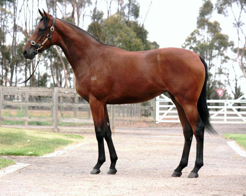 Lot 30 yearling 1 with Gai.jpg