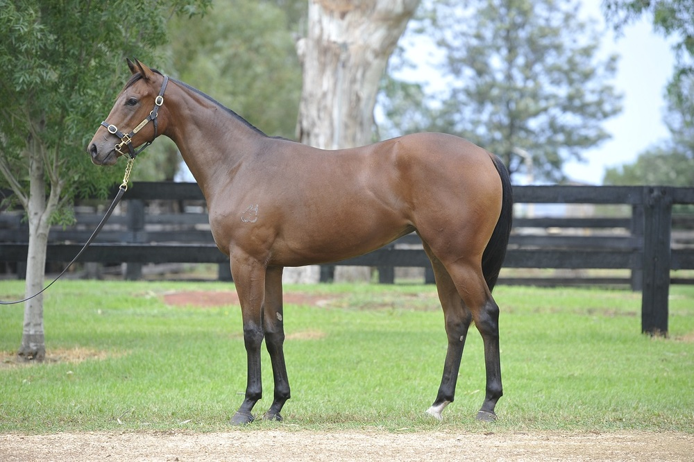 Lot 117 yearling with Gai.JPG