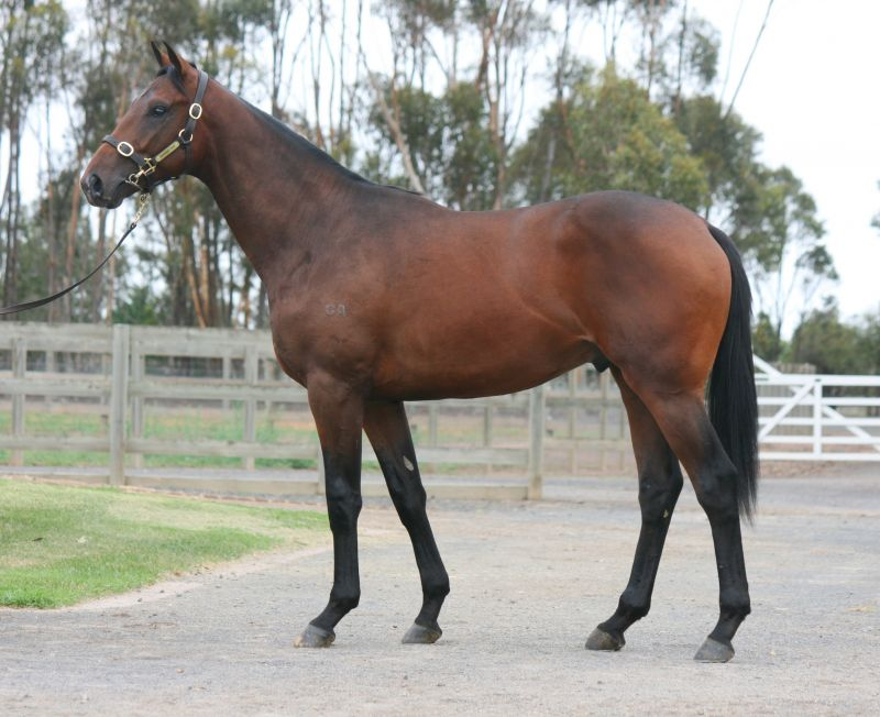 Lot 227 yearling with Gai.JPG