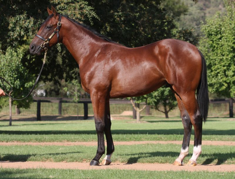 Lot 260 yearling with Gai.jpg