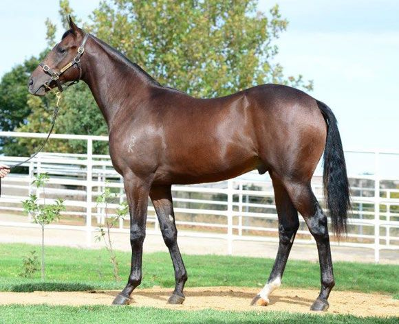 Lot 300 yearling with Gai.jpg