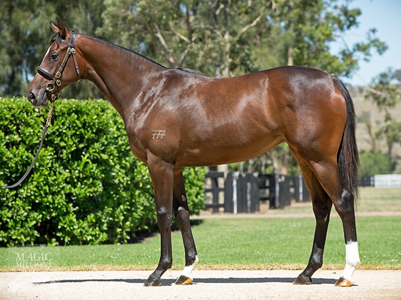 Lot 382 Sebring x Rocha filly.jpg