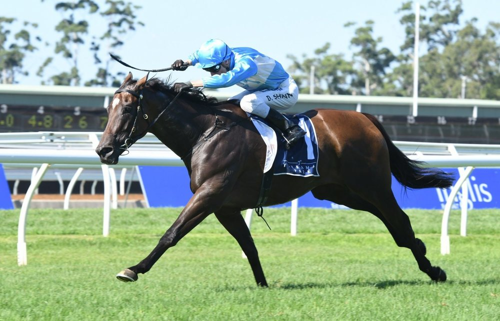 Multiple Group 2 winner Prompt Response pictured winning the Group 2 Breeders Classic (1200m)