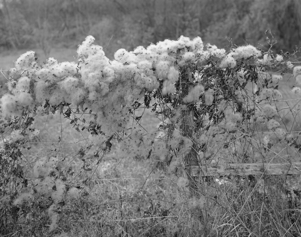 Fuzzy Flowers Fence.jpg