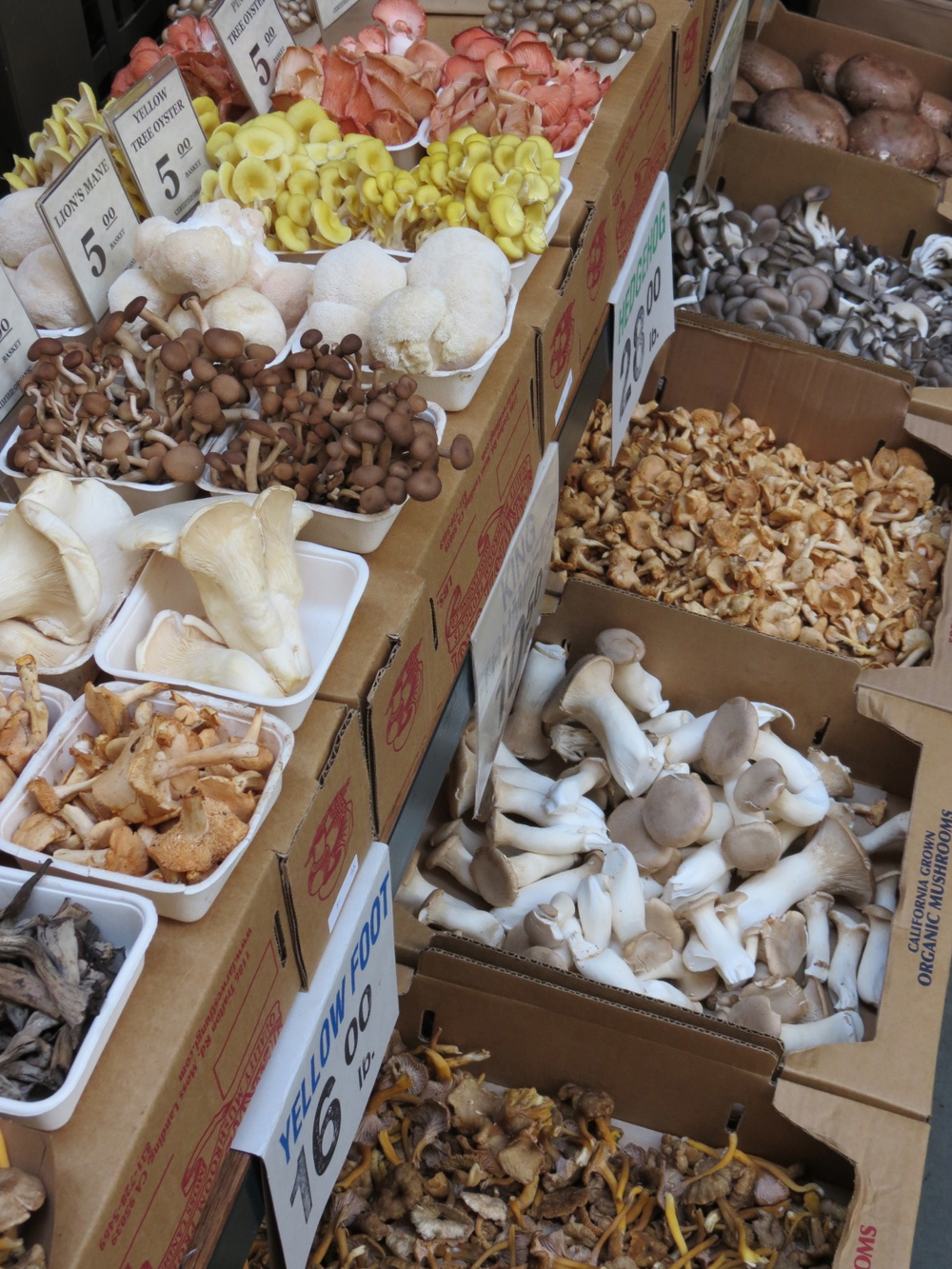 Mushrooms - San Francisco Markets 1.jpg