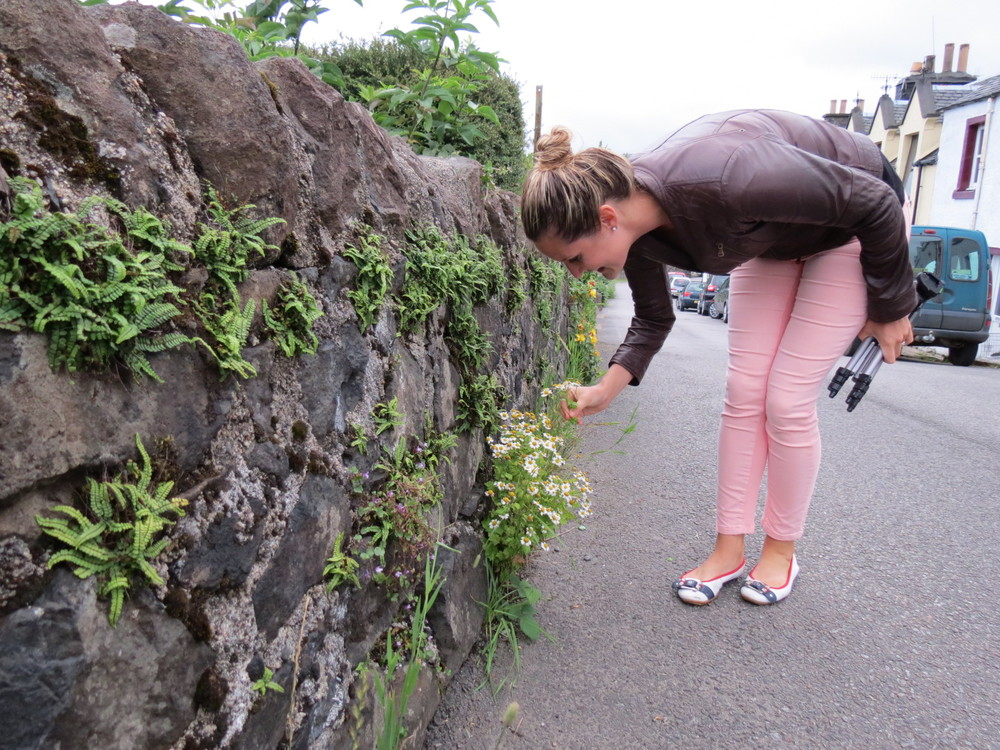 Discovering wild herbs on the streets of Tobermory, Isle of Mull, Scotland