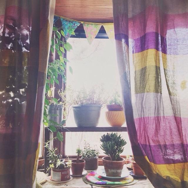 succulentwindow.jpg