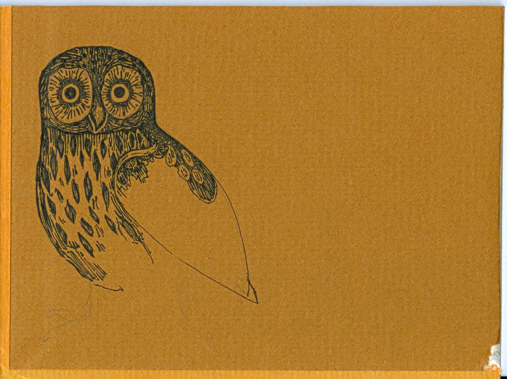 b_side.owl.jpg