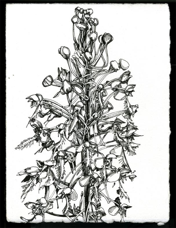 p_51.jpg