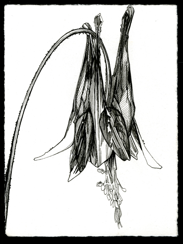 p_55.jpg